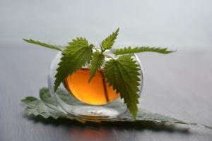 glasskopp med gyllen te og en brenneslekvist oppi