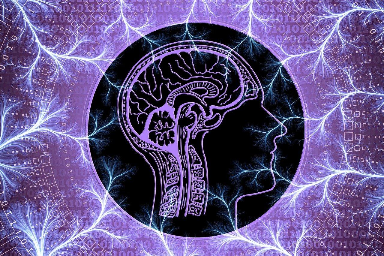 tegning av hjernen med lilla bakgrunn