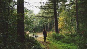 En mann på vei innover i en grønn skog